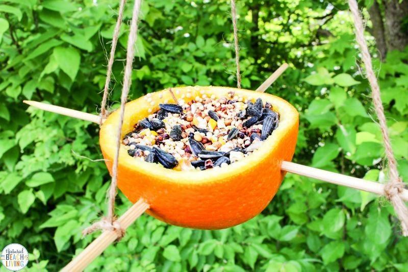 DIY Bird Feeder Ideas with Orange