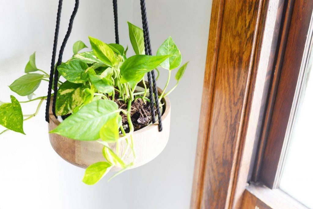 Wooden Hanging Planter